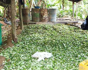 En Nariño destruyen laboratorio de coca del ELN avaluado en más de $3500 millones