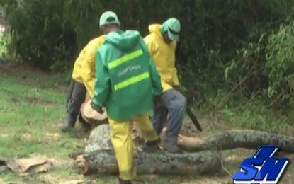 Árboles caídos, dejan emergencias por lluvias en Cali