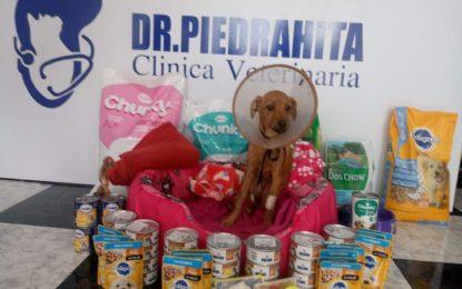 """Recompensa de hasta $5 millones por información del maltratador de la perra """"Lupita"""""""