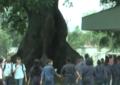 Instituciones educativas del centro de Cali apuestan a la cultura en los alumnos