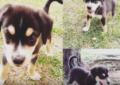 Amos de mascotas envenenadas en el norte de Cali, exigen justicia
