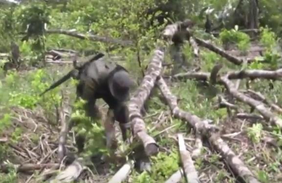 De forma agresiva se busca erradicar cultivos ilícitos en Colombia