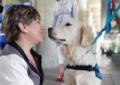 Perros guías y asistenciales podrán ingresar al sistema masivo