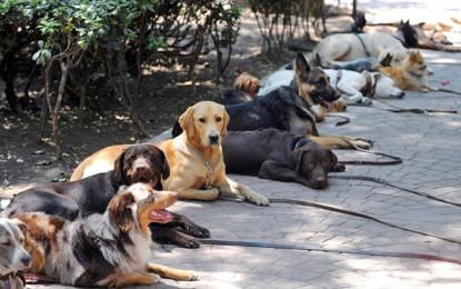 Jornada de adopción de perros y gatos sin hogar, el sábado 15 de agosto en el Parque del Perro.