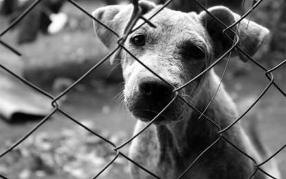 Aberrante caso de crueldad animal a un perro,  al oriente de Cali.