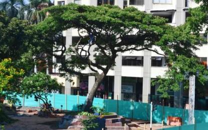 Twitteros evitan traslado de tradicional árbol caleño