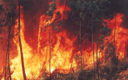 Organismos de socorro en alerta por incendios forestales en el Valle