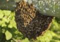 Hombre murió por ataque de abejas en Cali