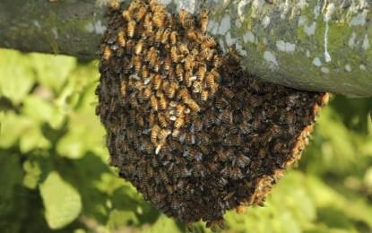 Un canino falleció por ataque de abejas