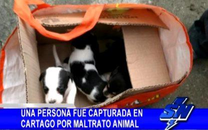 Una persona fue capturada en Cartago por maltrato animal