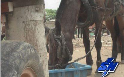 Solicitan más control a equinos en Cali