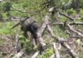 Suspenden erradicación de cultivos ilícitos en Jamundí