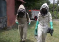 Alarmante crecimiento de enjambres o colmenas de abejas en Cali