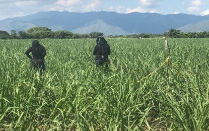 Fiscalía identificó los restos de una menor desaparecida en Guacarí