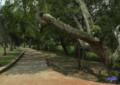 Contraloría sigue encontrando fallas en la obra Parque Lineal rio Cali