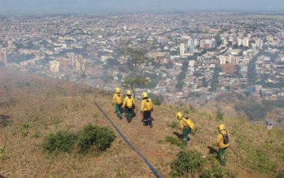 Lanzamiento de «Cerros más verdes» tras incendios forestales