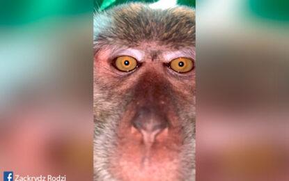 Primate se robó un celular para sacarse unas 'selfies'