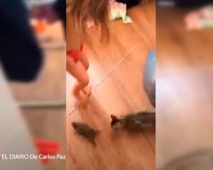 Tremendo susto se llevó una madre tras ver que no era un conejito con lo que jugaba su hija