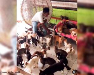 Video viral: indonesio vive con 480 gatos en su casa
