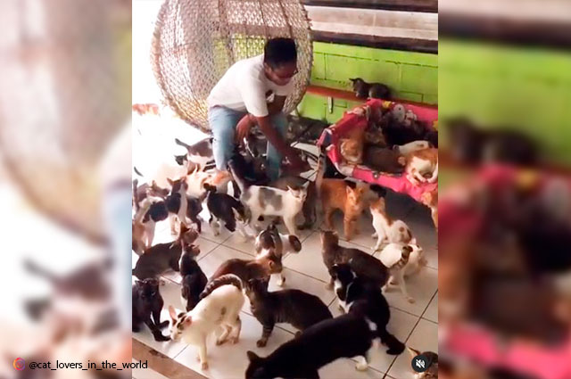 Video viral: indonesio vive con 480 gatos en su casa