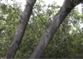 Comunidad denuncia descuido por parte de las empresas encargadas de la arborización en la ciudad